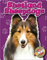 Shetland Sheepdogs: Dog Breeds