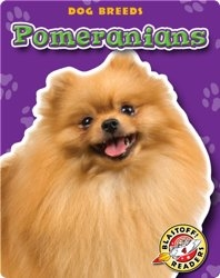 Pomeranians: Dog Breeds