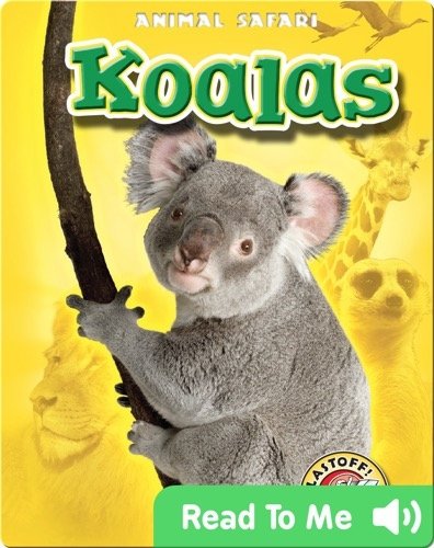 Koalas: Animal Safari