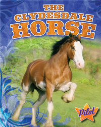 The Clydesdale Horse