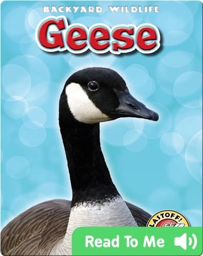 Geese: Backyard Wildlife