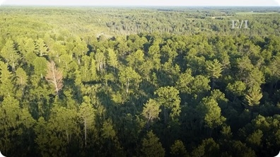 Protecting Forests and Enhancing lives