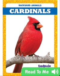 Backyard Animals: Cardinals