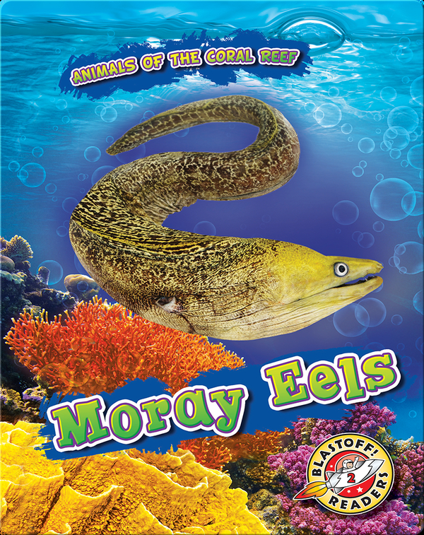 Animals of the Coral Reefs: Moray Eels