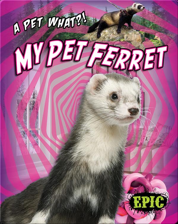 My Pet Ferret
