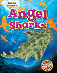 Shark Frenzy: Angel Sharks