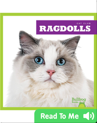 Cat Club: Ragdolls