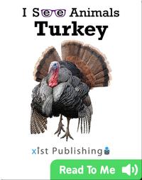 I See Animals: Turkey