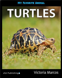My Favorite Animal: Turtles
