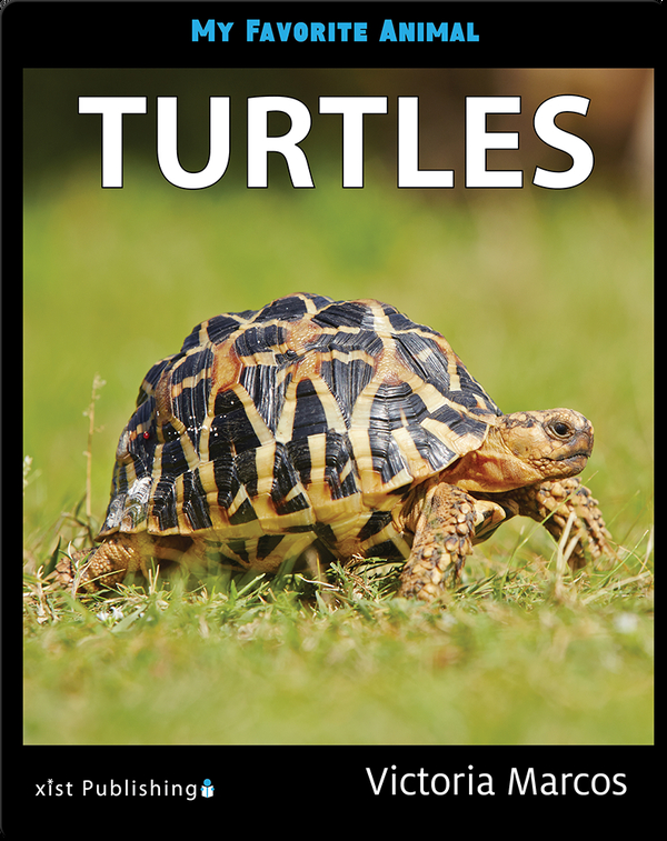 My Favorite Animal: Turtles