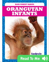 Rain Forest Babies: Orangutan Infants