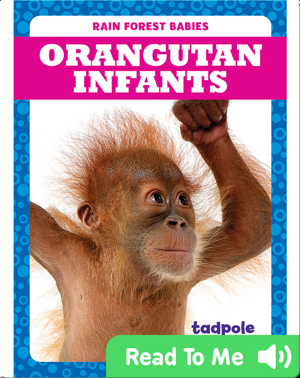 Rain Forest Babies: Orangutan Infants