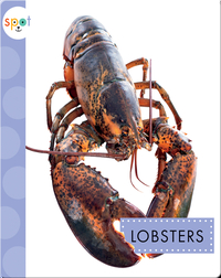 Ocean Animals: Lobsters