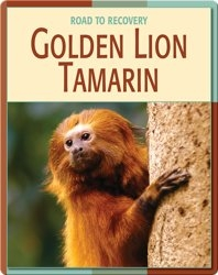 Road To Recovery: Golden Lion Tamarin
