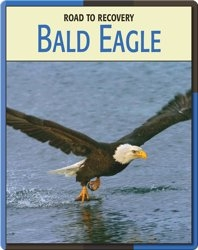Road To Recovery: Bald Eagle
