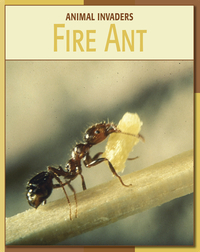 Animal Invaders: Fire Ant