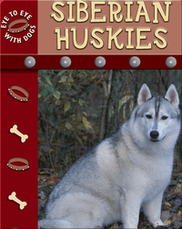 Eye To Eye With Dogs: Siberian Huskies