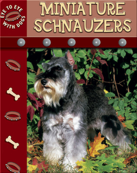 Eye To Eye With Dogs: Miniature Schnauzers