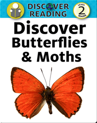 Discover Butterflies and Moths