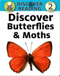 Discover Butterflies and Moths