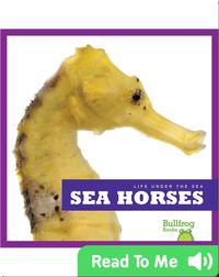 Life Under The Sea: Sea Horses