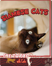 Eye To Eye With Cats: Siamese Cats