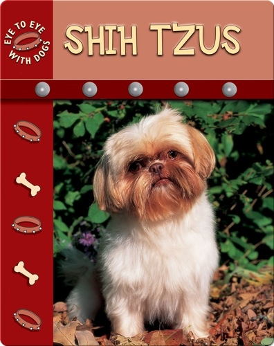 Eye To Eye With Dogs: Shih Tzu