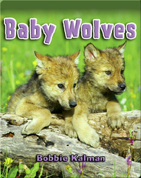 Baby Wolves