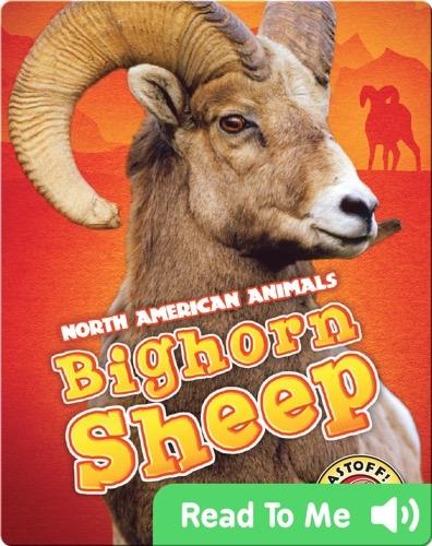 North American Animals: Bighorn Sheep