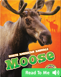 North American Animals: Moose