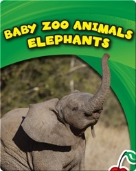 Baby Zoo Animals: Elephants