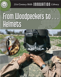 From Woodpeckers to... Helmets