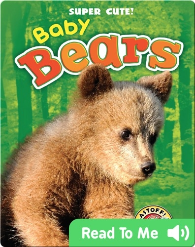 Super Cute! Baby Bears