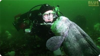 Diver meets huge Pacific Wolf Eel