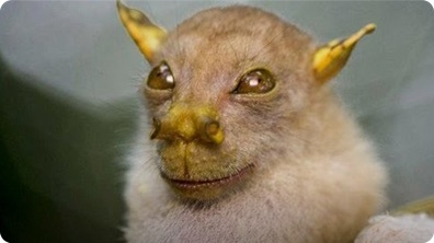 Meet the Yoda Bat