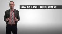 How Do Taste Buds Work?