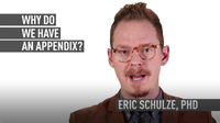 Why Do We Have an Appendix?
