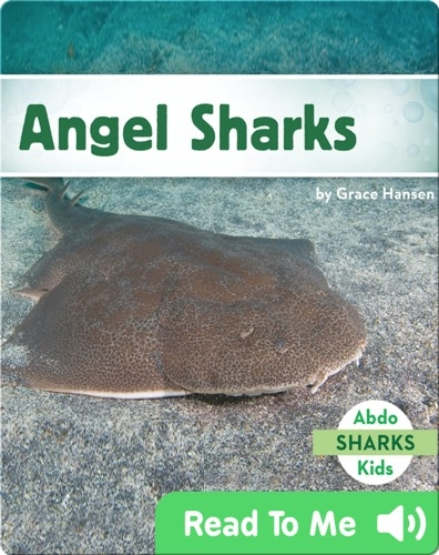Angel Sharks