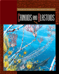 Crinoids and Blastoids