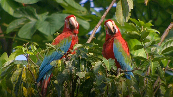 Zoology - The Magnificent Macaw