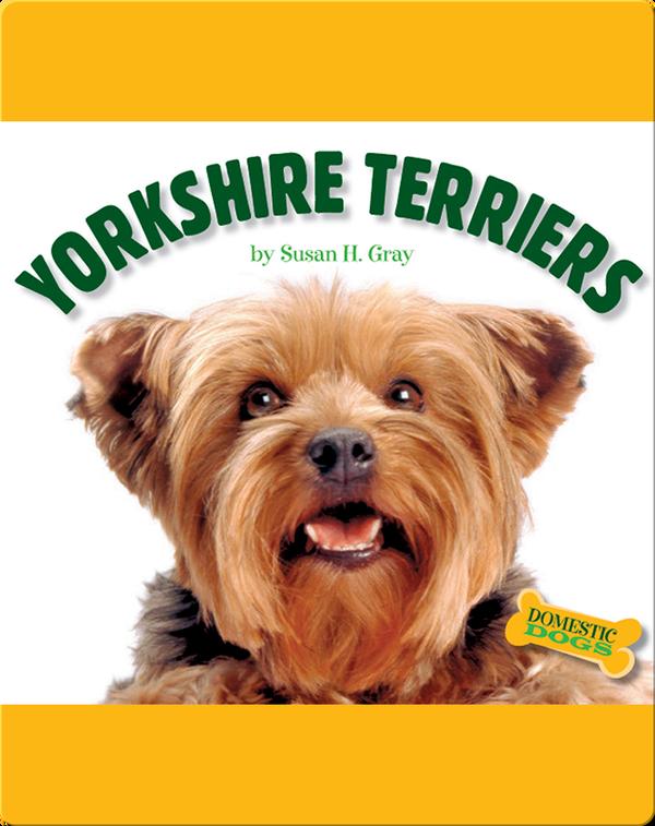 Yorkshite Terriers