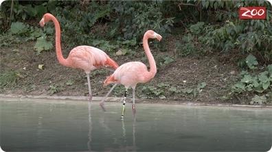Flamingo Rehabilitation