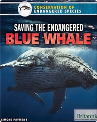 Saving the Endangered Blue Whale