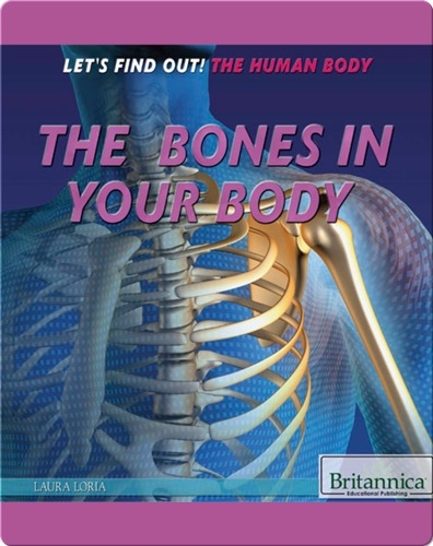 The Bones in Your Body