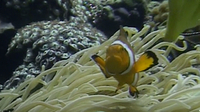Under the Waves: Symbiotic Relationships