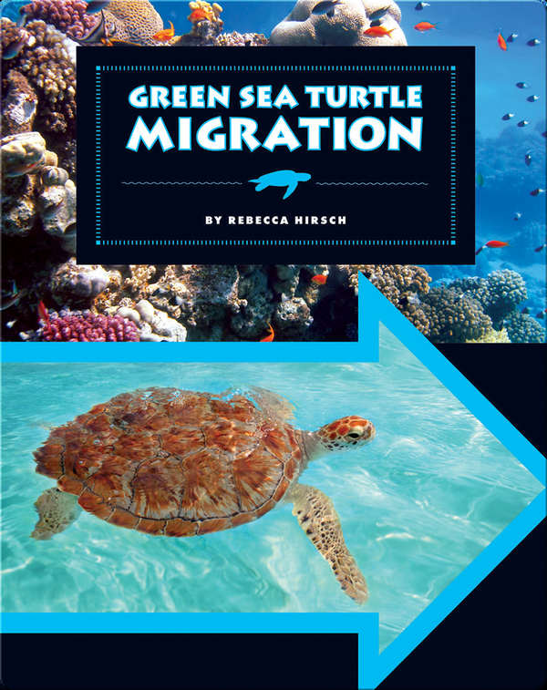Green Sea Turtle Migration