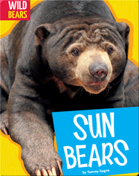 Sun Bears
