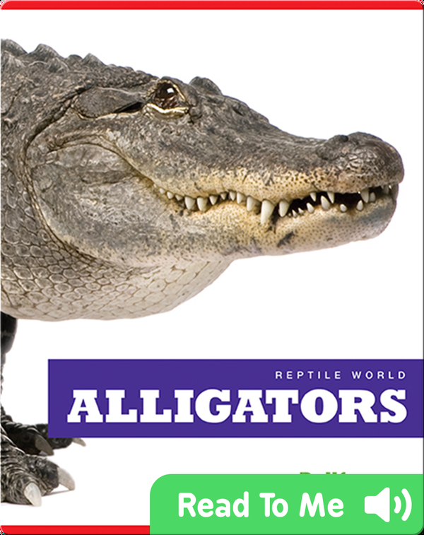 Reptile World: Alligators