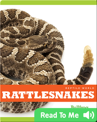 Reptile World: Rattlesnakes