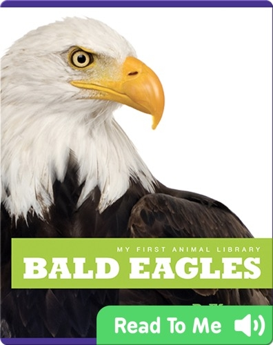 My First Animal Library: Bald Eagles